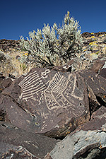 Web pictograph on rock