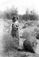Moapariat Paiute woman gathering seeds, southern Nevada.
