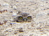 Owl at Gilcrease - closeup