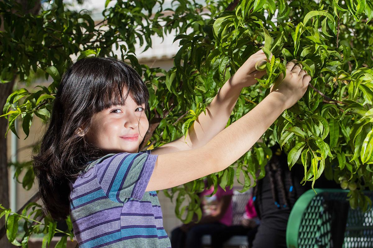 Branching out: Bracken Elementary student Natalia  Vargas enjoys the school garden's plum tree.