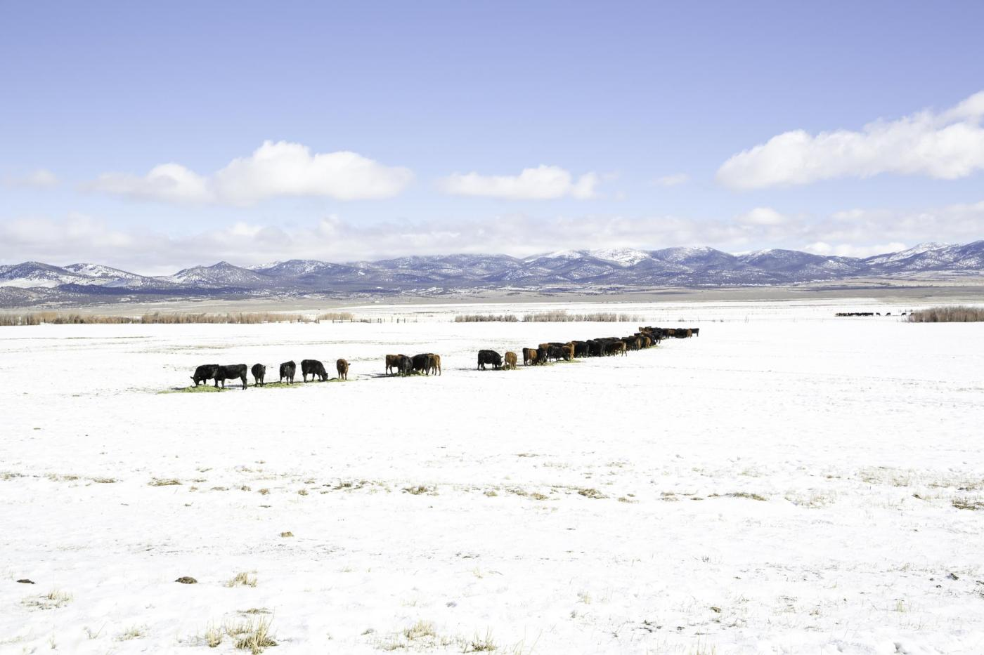 """Participants were shown working cattle ranches in nearby Clover Valley, during the """"A Day at the Ranch"""" tour."""