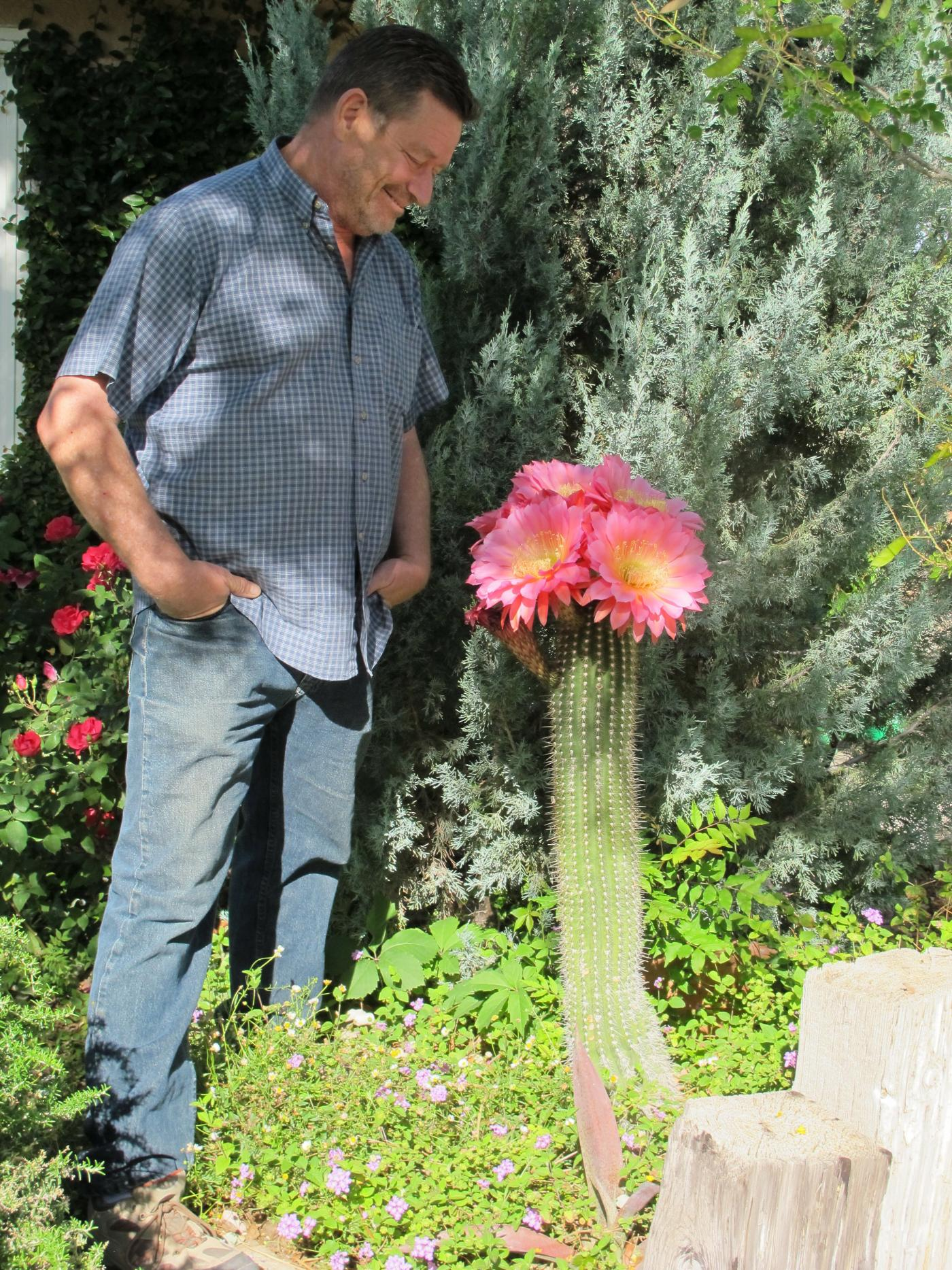 "Norm admires his Trichocereus hybrid ""Flying Saucer"""