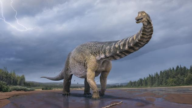 <em>Australotitan cooperensis</em> is the new species confirmed by paleontologists in Australia. It's the biggest dinosaur discovered in Australia.