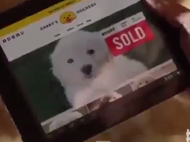 A still from the GoDaddy Super Bowl ad that the company has now pulled.