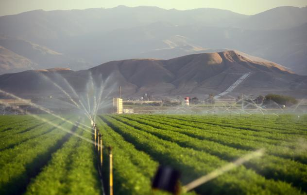 Fields of carrots are watered March 29, 2015, in Kern County, Calif. Subsidized water flowing in federal and state canals down from the wet north to the arid south helped turn the dry, flat plain of the San Joaquin Valley into one of the world's most imp