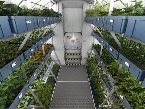 Crops from the plant growth system on the International Space Station's orbiting laboratory are sample-ready for crew members of Expedition 44.