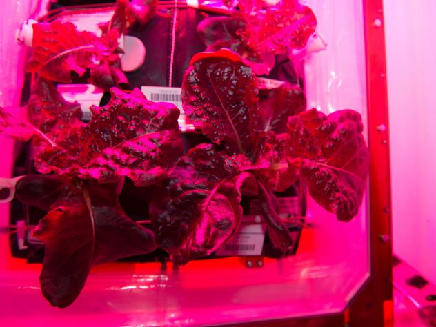 """The plants sprout from artificial """"pillows"""" that mimic soil on Earth."""