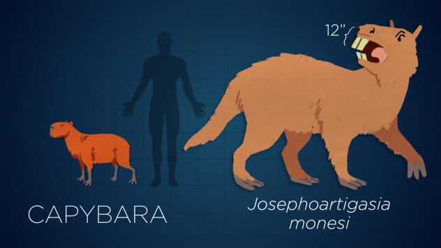 <em>Josephoartigasia </em>was a cow-size rodent that lived 3 million years ago.