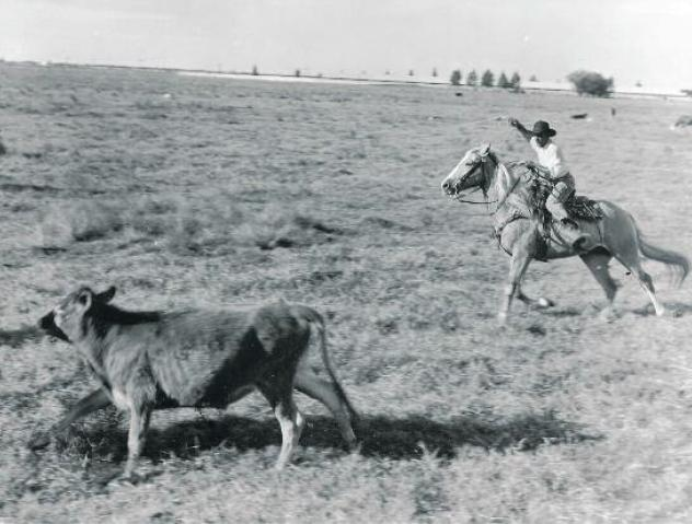 """A caption from the exhibit: """"Black cowboy at work on U.S. Sugar Corporation land near Clewiston, Florida, about 1947."""""""