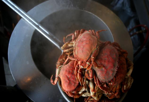 An algae bloom has closed crab season in California. The bloom, created by an organism called <em>Pseudo-nitzschia,</em>produces a neurotoxin that can build up in marine life. It causes vomiting, diarrhea, and cramping in humans and even death in severe