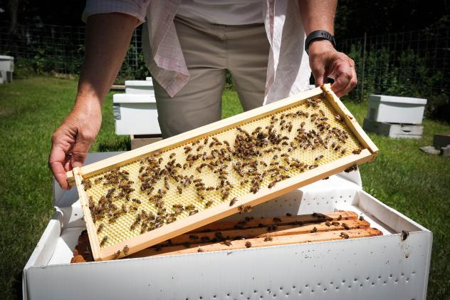 Bucking the paradigm in the beekeeping world, beekeeper and breeder Jeff Berta doesn't use pesticides to control mites on his honeybee colonies near Slippery Rock, Pa. Instead, he breeds bees that have natural grooming behaviors that keep colonies free o
