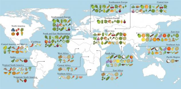 This screenshot of an interactive graphic shows that, on average, crops that originated in tropical South America contribute 821.6 calories daily to West African diets.