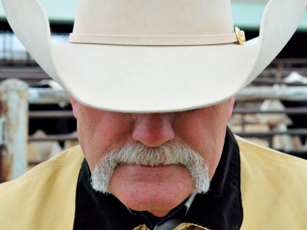 Chief Agent Jerry Flowers looks over cattle at OKC West Livestock Market in El Reno, Oklahoma on Nov. 12, 2014. Cattle rustlers will often try to sell off their stolen cows at livestock markets to make a quick profit.
