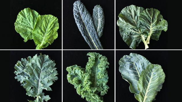 After two weeks of keeping kale journals (really!), participants came together to discuss their feelings about kale for three hours.