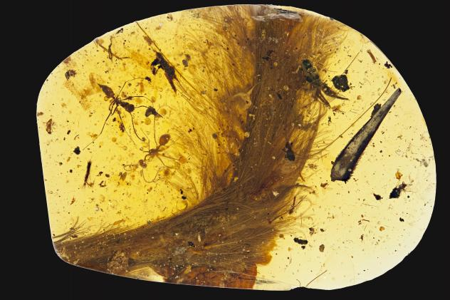 People have been mining amber in northern Myanmar for at least 2,000 years. The amber there has been found to contain traces of life from millions of years ago.
