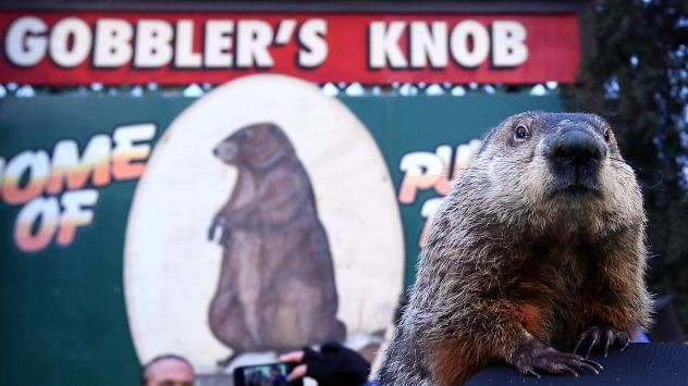 Punxsutawney Phil saw his shadow Thursday, officials said, prompting a declaration of six more weeks of winter. The groundhog is seen here at the 2013 celebration at Gobbler's Knob in Punxsutawney, Pa.