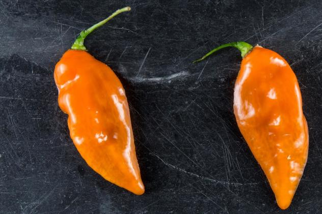 Cornell plant breeder Michael Mazourek created the Habanada as part of his doctoral research. He got the idea after discovering a rogue heatless pepper whose genetics behaved very differently from a naturally sweet pepper like the Bell.