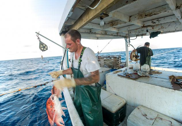 A fisherman in the Gulf of Mexico. Catch share programs allot fishermen a portion of the catch in advance, in hopes of keeping them from racing each other to sea, sometimes in risky weather. These programs are controversial. They also work, a new study f