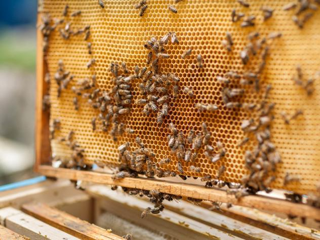 """Earlier this year, California authorities uncovered this """"beehive chop-shop"""" in a field in Fresno County. A single bee is worth a fraction of a cent, but there can be as many as 65,000 bees in each hive."""