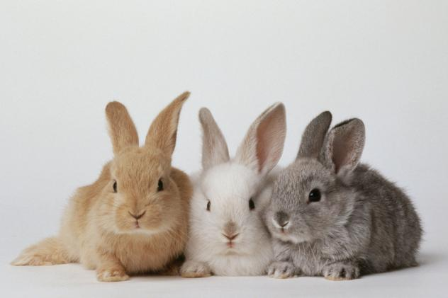 In an effort to combat chronic food shortages, President Nicolas Maduro and his ministers are embarking on a campaign to convince Venezuelans to eat rabbits.