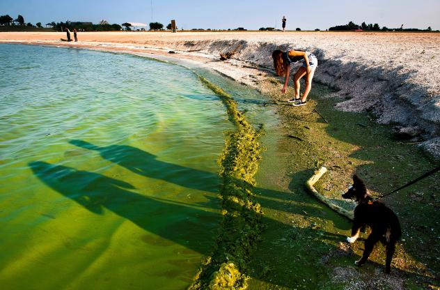 A algae bloom in Lake Erie contaminated the water supply for Toledo, Ohio, in August 2014. About 400,000 people were without useable water.