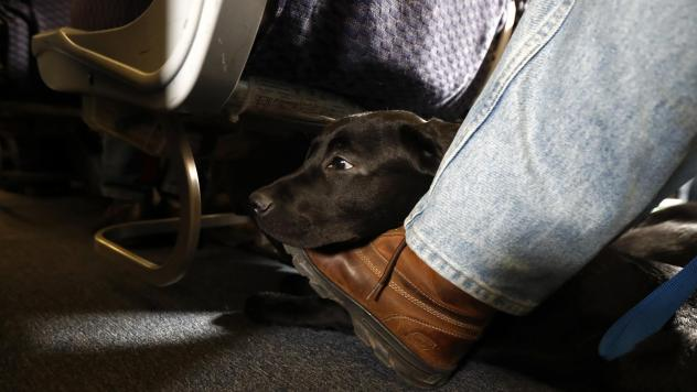 A service dog named Orlando rests on the foot of its trainer, John Reddan, while sitting inside a United Airlines plane at Newark Liberty International Airport during a training exercise last year. United Airlines wants to see more paperwork before passe