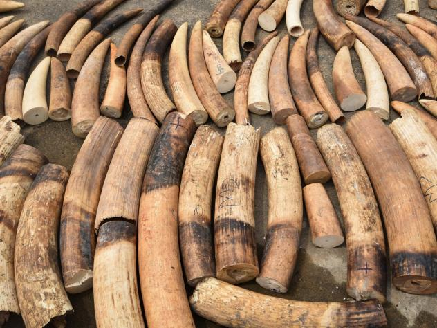 The companies have formed a coalition to try to stop traffickers from trading in endangered species and items from wildlife such as ivory.