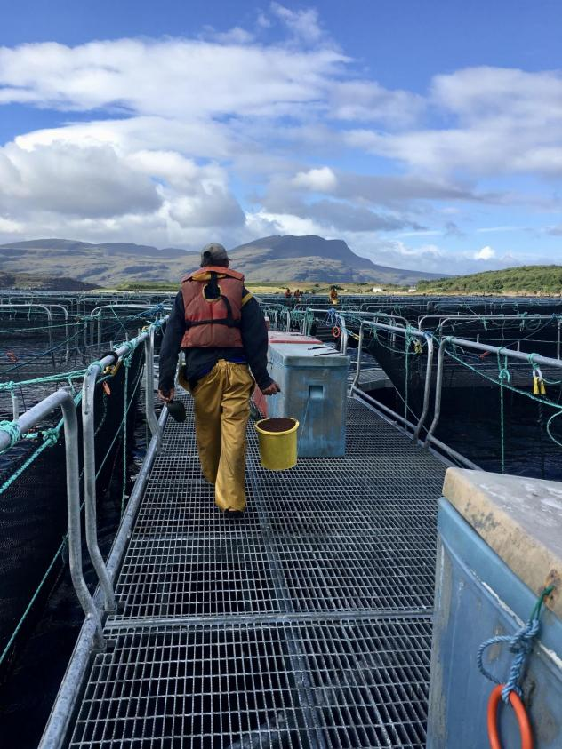 Scientists in Scotland monitor the wild fish population. The aquaculture industry contributes more than $2 billion to the U.K.'s economy, but not without risk to the environment.