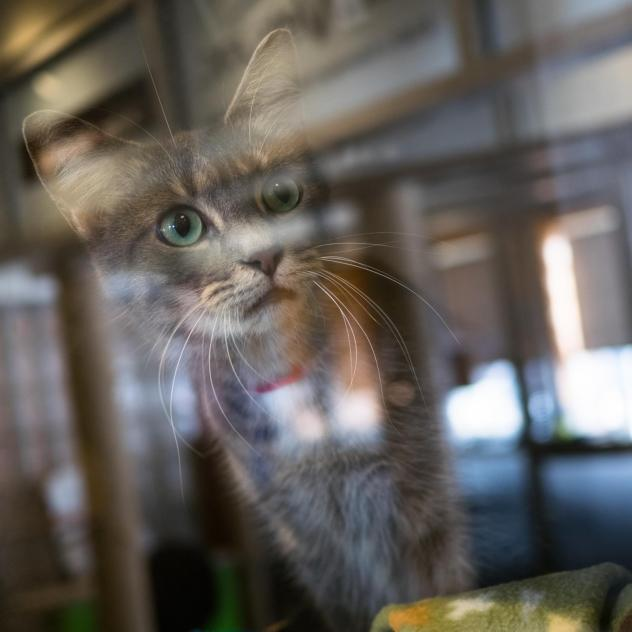 Each year, 3,000 to 4,000 cats are adopted through the Humane Rescue Alliance, and another 1,000 ferals are trapped, neutered and released in Washington, D.C. Cat lovers have joined up with bird lovers to count the feral cats in the city.