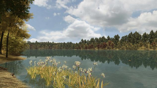 Blue flag blooming along Walden Pond in early fall.