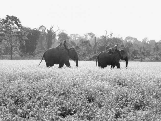 From <em>Giants of the Monsoon Forest: Living and Working with Elephants</em> by Jacob Shell