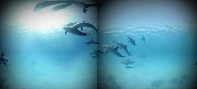"""Though not the same as actually jumping into the waves, a virtual reality program like this one that let a headset-wearing patient """"swim with dolphins"""" was enough of an immersive distraction to significantly reduce pain, a study found."""