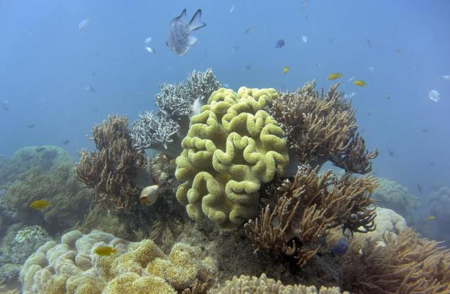 """The Australian federal government has downgraded its long-term outlook of the Great Barrier Reef to """"very poor,"""" and it says that climate change is the most significant threat."""