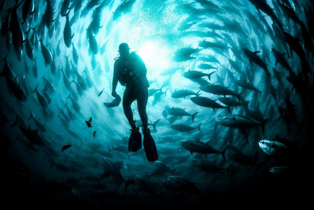 A diver maintains an open-water cage where tuna are being farmed in Izmir, Turkey. In the U.S., federally controlled ocean waters have been off limits to aquaculture, curbing the industry's growth. But the tide may be turning.