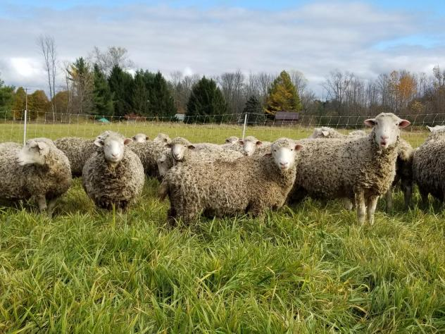 Essex Farm differs from many large modern farms that focus on one or two cash crops.  Instead, the Kimballs raise everything from sheep to cabbages, selling their food directly to customers. They've become national evangelists of the small farm, local fo