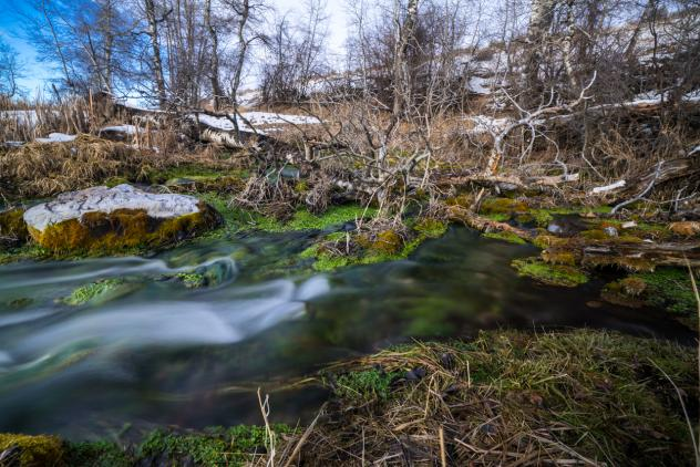 Water emerges from the headwaters of Nevada Spring Creek at around 44 degrees year-round. A mitigation bank provided private money to reconnect it to Montana's Blackfoot River and to restore a prized trout fishing habitat.