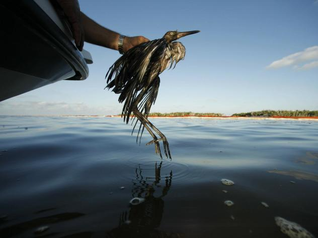 Companies would no longer face the threat of prosecution for accidentally killing or injuring birds.