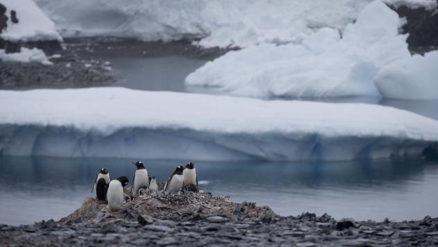 Penguins gather near a Chilean research station on the Antarctic Peninsula, not far from the Argentine station that reported the record high temperature Thursday. World meteorological experts still need to verify the record, but it does fit with a broade