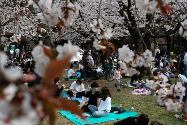 People picnic underneath the cherry blossoms in Tokyo's Yoyogi Park on Sunday. People strolled under the trees and spread out picnic blankets, ignoring the posted signs about the dangers of COVID-19.