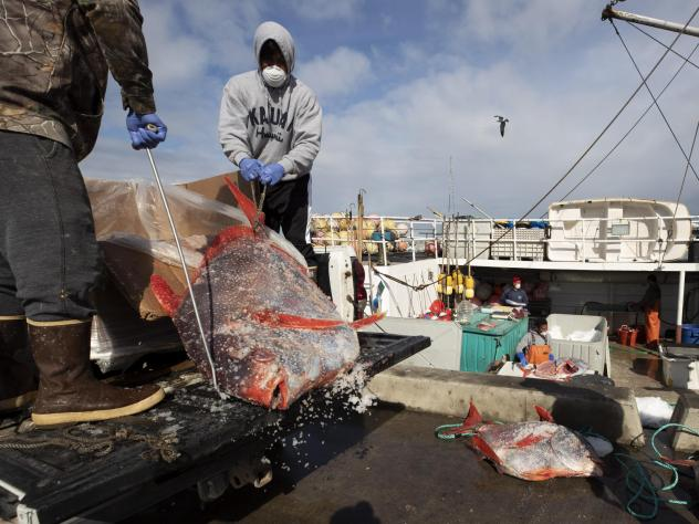 Opah fish are hauled onto a dock for sale last week in San Diego. Fishermen coming home to California after weeks at sea are finding strict anti-coronavirus measures, and nowhere to sell their catch.