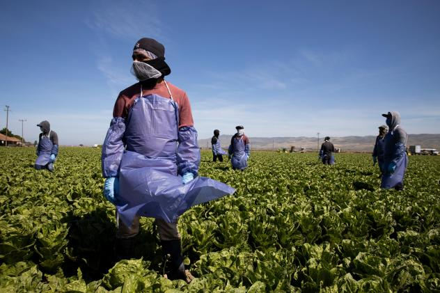 With the coronavirus spreading, farms try to keep workers like these in Greenfield, Calif. safe through physical distancing and other measures but advocates for laborers say protections are often not adequate.