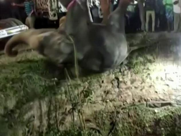 An elephant was rescued in southern India after falling into a well estimated at roughly 50-feet deep.
