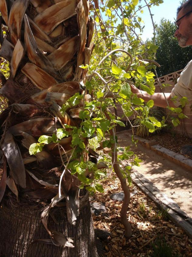 Can Your Desert Trees And Plants Fight