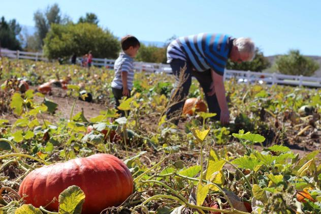 Desert Farming - A Look At Nevada's Farm-To-Table Movement
