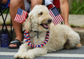 Dogs and cats can be particularly sensitive to loud noises such as fireworks. Here, a dog watches an Independence Day parade in Takoma Park, Md., in 2013.