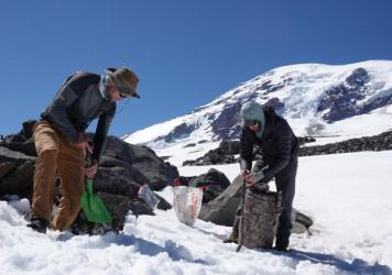 Though they're called ice worms, the creatures Hotaling (right) and his colleagues study on the glaciers of Mount Rainier can't handle the slightest bit of freezing. If temperatures dip even slightly below zero degrees Celsius (32 degrees Fahrenheit), Ho