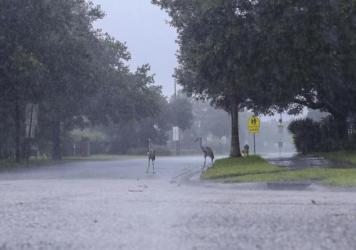 Cranes cross the road during a rainstorm from Tropical Storm Elsa, Wednesday, July 7, 2021 in Westchase, Fla. The Tampa Bay area was spared major damage as Elsa stayed off shore as it passed by. By early Friday morning, the system had made its way up the
