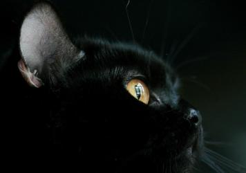 For one Englishwoman, her pet black cat (different from the one pictured here) was very lucky indeed.