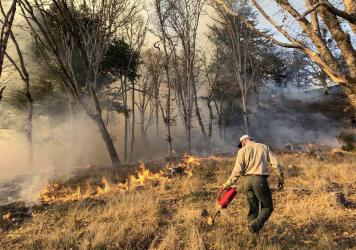 Prescribed burns, like this one in Humboldt County, Calif., reduce the underbrush without destroying trees.