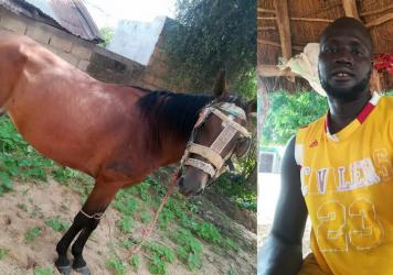 Bassirou Ndao's horse ran away. He needed the animal for his farmwork and couldn't afford a replacement. Posting a photo on the Trouvés ou Perdus Facebook page led to an equine reunion.
